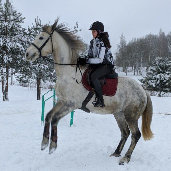 Palejas zirgi
