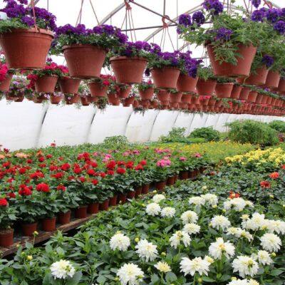 """Gardening centre """"Sprogas"""""""