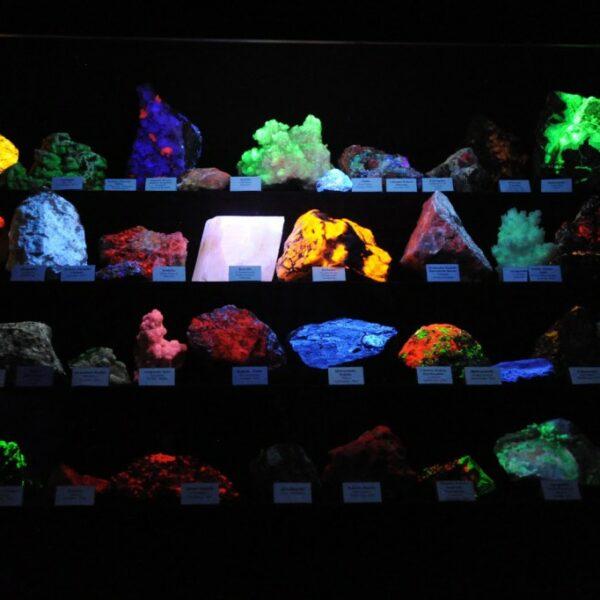 """Nature Museum """"Vides labirints"""" (""""Nature Labyrinth"""")"""