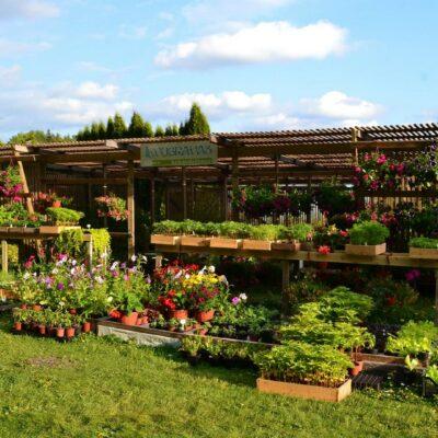 """Gardening centre """"Ievugravas"""""""