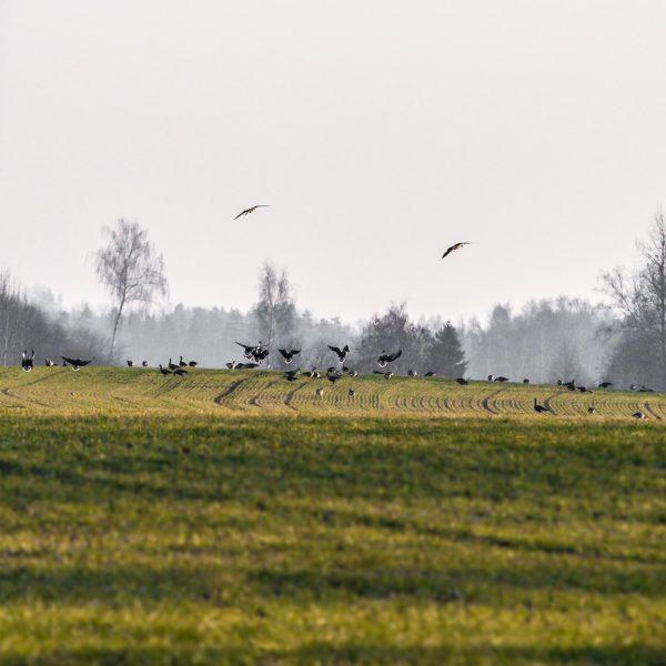 Putnu vērošana Alūksnē