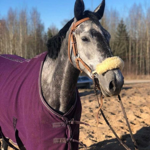 Zirgu izjādes pavasarī
